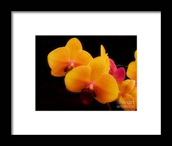 Yellow And Pink Framed Print featuring the photograph Bright Orchids by Scott B Bennett
