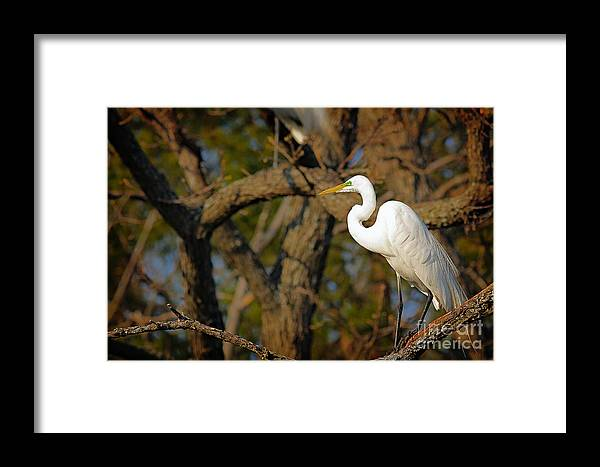 Cutts Nature Photography Framed Print featuring the photograph Bright White Heron by David Cutts
