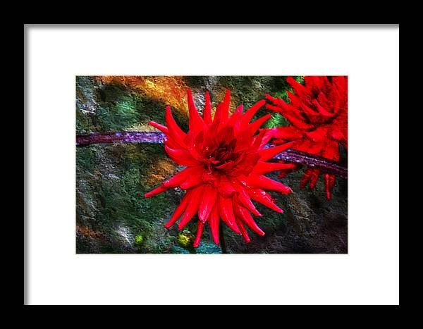Autumn Framed Print featuring the photograph Brilliance In An Autumn Garden - Red Dahlia by Marie Jamieson