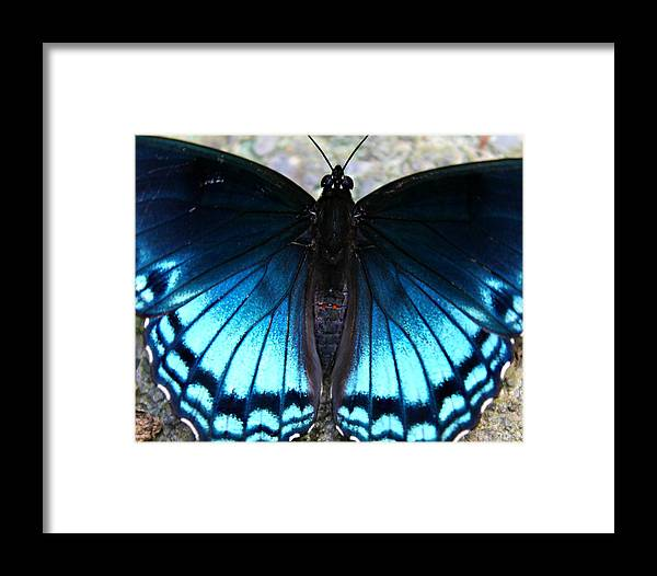Butterfly Framed Print featuring the photograph Brilliant Butterfly by Candice Trimble