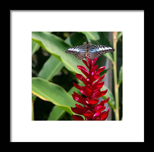Butterfly Framed Print featuring the photograph Brilliant Butterfly by Natalie Rotman Cote