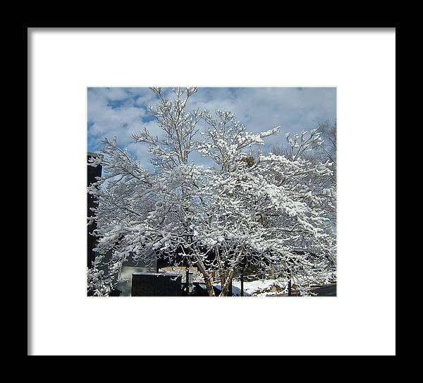 Brilliant Framed Print featuring the photograph Brilliant Snow Coated Tree by Susan Wyman