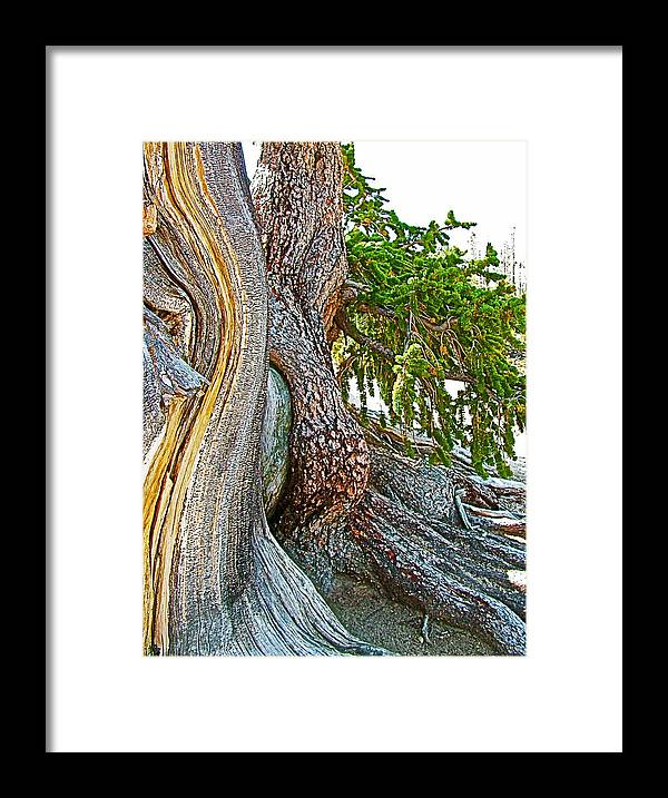 Bristlecone Pine On Ramparts Trail In Cedar Breaks National Monument Framed Print featuring the photograph Bristlecone Pine On Ramparts Trail In Cedar Breaks National Monument-utah by Ruth Hager