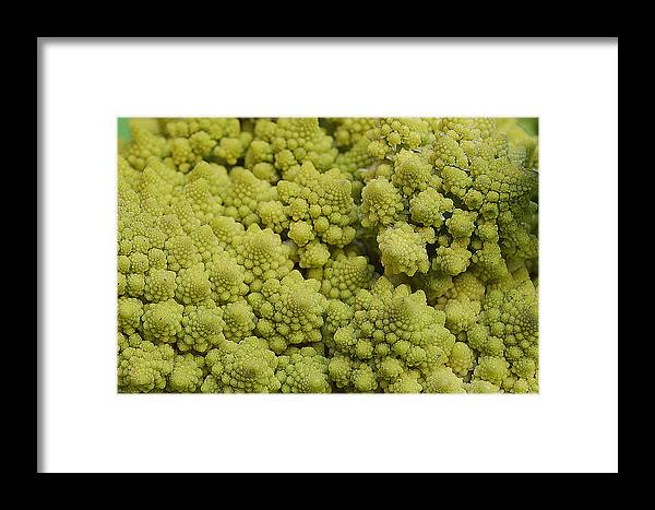 Vegetable Framed Print featuring the photograph Broccoli Heirloom by Felicia Tica