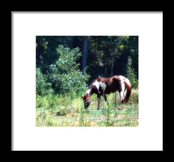 Wildlife Framed Print featuring the photograph Brown And White Horse Grazing by Eva Thomas