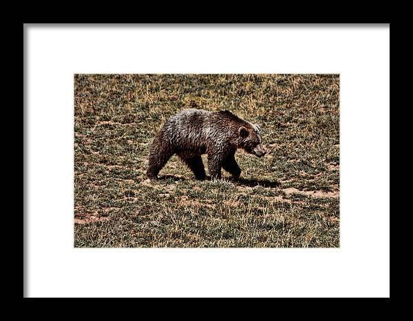 Animals Framed Print featuring the photograph Brown Bears by Angel Jesus De la Fuente