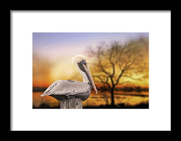 Brown Pelican Framed Print featuring the photograph Brown Pelican At Rest by Bonnie Barry