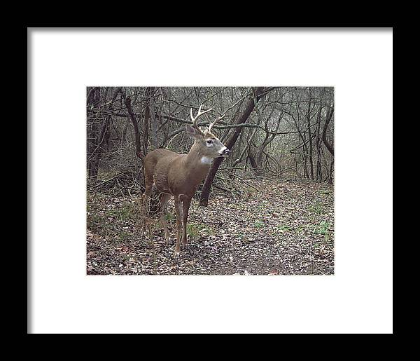Landscape Framed Print featuring the photograph Buck In The Woods by Janet Mcconnell