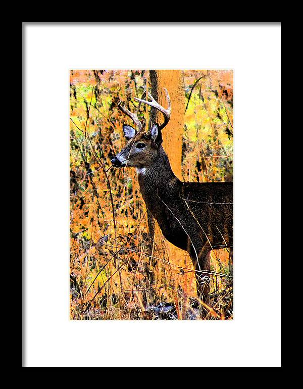 White Tail Deer Framed Print featuring the photograph Buck Scouting For Doe by Lorna R Mills DBA Lorna Rogers Photography