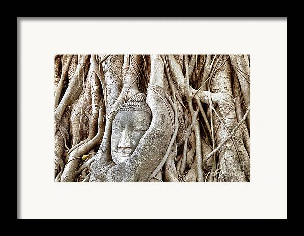 Asia Framed Print featuring the photograph Buddha Head In Tree Wat Mahathat Ayutthaya Thailand by Fototrav Print