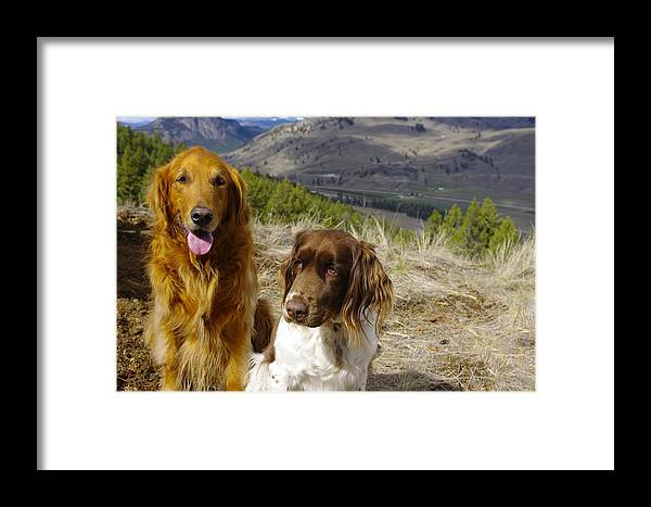 Dogs Framed Print featuring the photograph Budds On A Hike by John Greaves