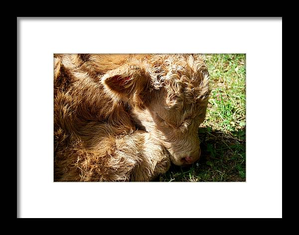 Cow Framed Print featuring the photograph Buffie by Kathy Sampson