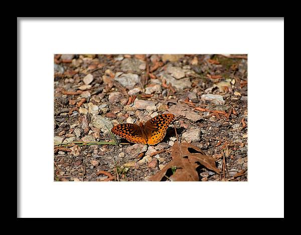 Bugs Framed Print featuring the photograph Bug Art 115 by Lawrence Hess