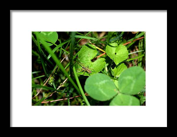 Bugs Framed Print featuring the photograph Bug Art 121 by Lawrence Hess