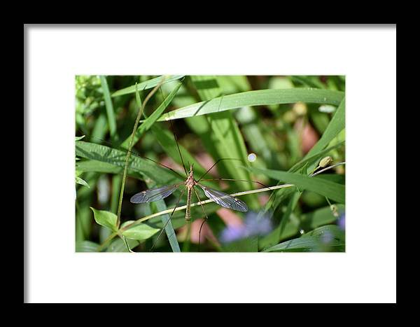 Bugs Framed Print featuring the photograph Bug Art 125 by Lawrence Hess