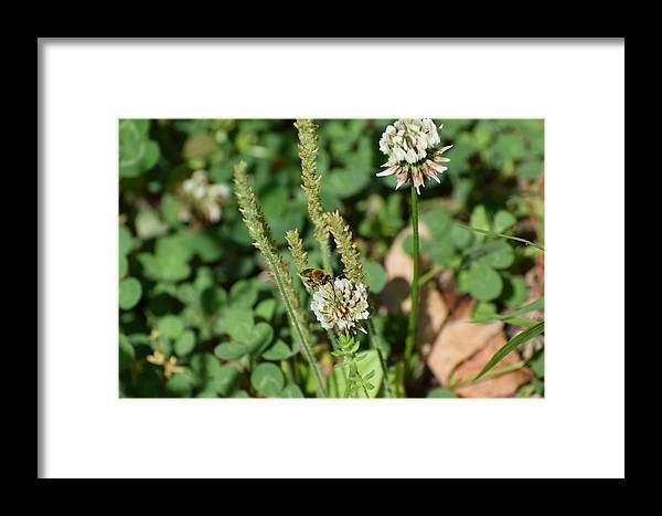 Bugs Framed Print featuring the photograph Bug Art 129 by Lawrence Hess