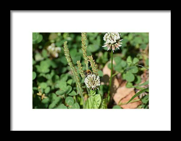 Bugs Framed Print featuring the photograph Bug Art 131 by Lawrence Hess
