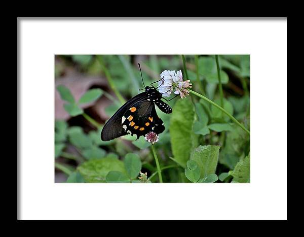 Bugs Framed Print featuring the photograph Bug Art 134 by Lawrence Hess