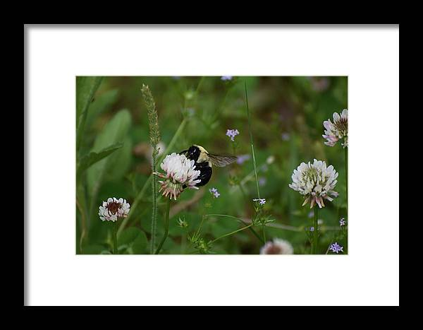Bugs Framed Print featuring the photograph Bug Art 136 by Lawrence Hess