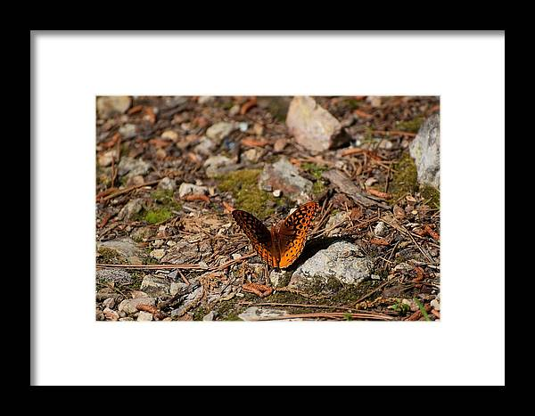 Butterfly.insects Framed Print featuring the photograph Bug Art114 by Lawrence Hess