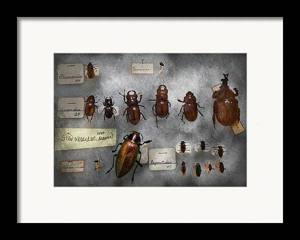 Hdr Framed Print featuring the photograph Bug Collector - The Insect Collection by Mike Savad
