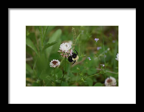 Bugs Framed Print featuring the photograph Bugs 140 by Lawrence Hess