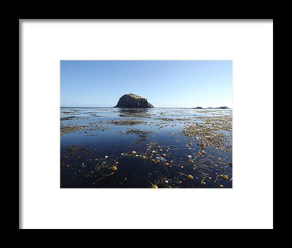 Framed Print featuring the photograph Bull Kelp Bay by Randy Esson