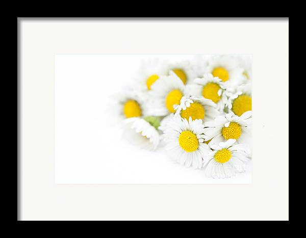 Floral Framed Print featuring the photograph Bunch Of Daisies by Anne Gilbert