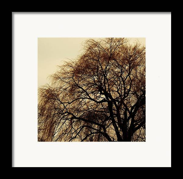 Beautiful Winter Willow Tree  Yellow Framed Print featuring the photograph Burlington Willow by Todd Sherlock