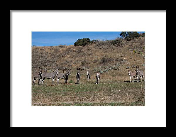 Burros Framed Print featuring the photograph Burros by Christina Hale