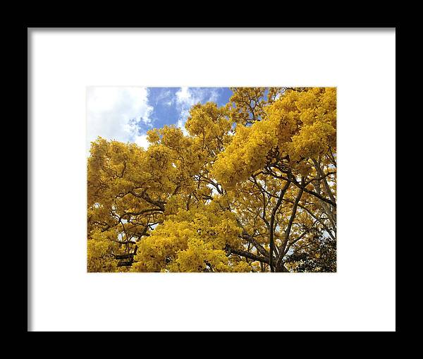 Floweringtree Framed Print featuring the photograph Burst 2 by Ange Sylvestri