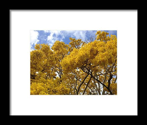 Floweringtree Framed Print featuring the photograph Burst by Ange Sylvestri