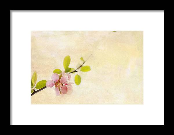 Blossom Framed Print featuring the photograph Bursting Out by Rebecca Cozart