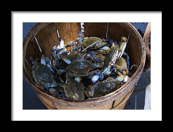 Bushel Basket of Blue Crabs by Paulette Thomas