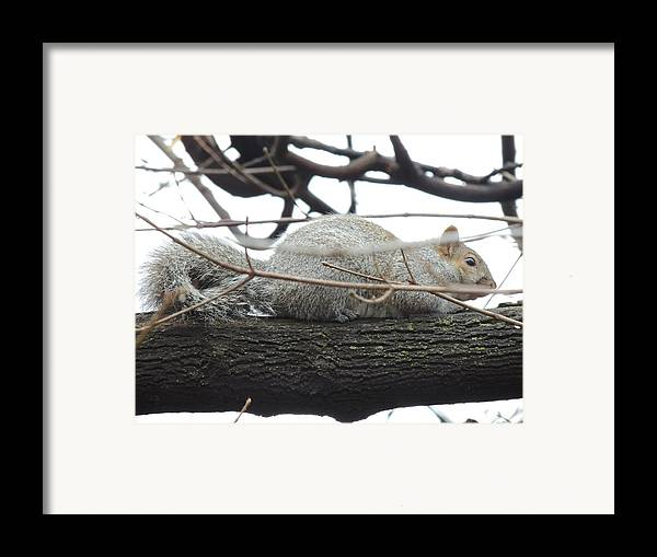 Bushy Tail Framed Print featuring the photograph Bushy Tail by Todd Sherlock