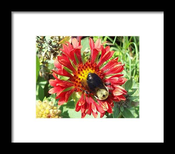 Morning Walk Framed Print featuring the photograph Busy As A Bee by Paul Zavattieri