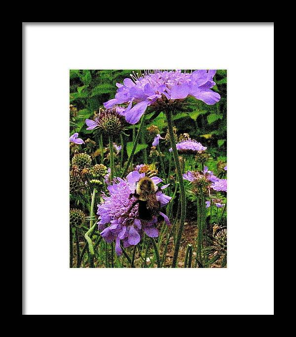 Flower Framed Print featuring the photograph Busy Bee by Martin S Gold