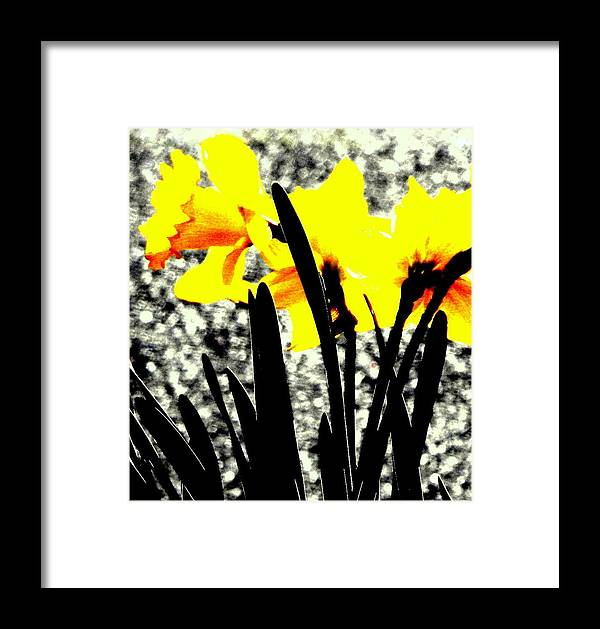 Buttercups Framed Print featuring the photograph Buttercup by Jolie Bell