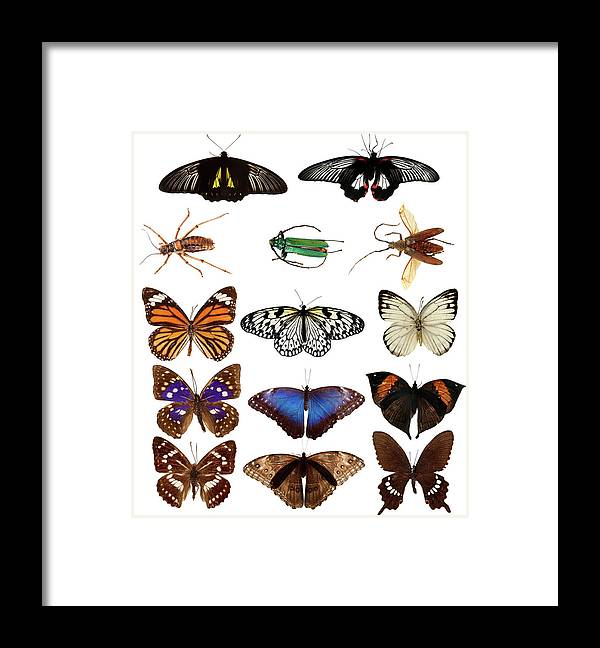 Common Blue Butterfly Framed Print featuring the photograph Butterflies And Beetles by Mashabuba