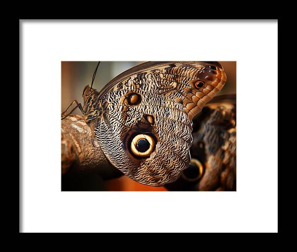 Butterfly Framed Print featuring the photograph Butterfly At Rest by Linda Morland
