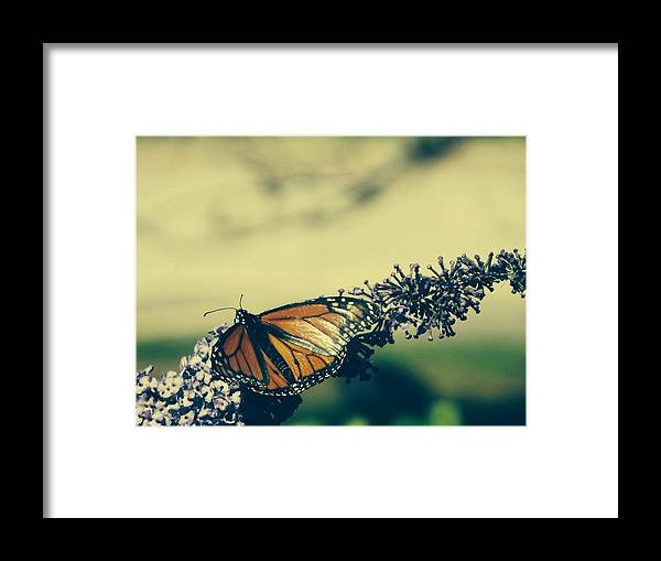 Butterfly Framed Print featuring the photograph Butterfly At Royal Botanical Gardens by Justen Athanasiou