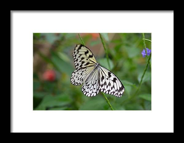 Butterfly Framed Print featuring the photograph Butterfly Charm by Chandra Wesson