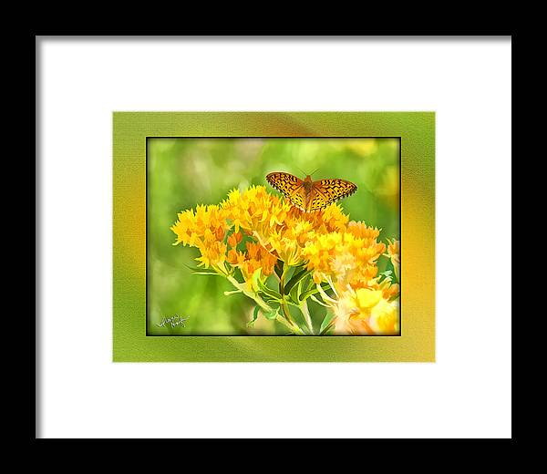 Butterfly Framed Print featuring the digital art Butterfly by Diane Hagler