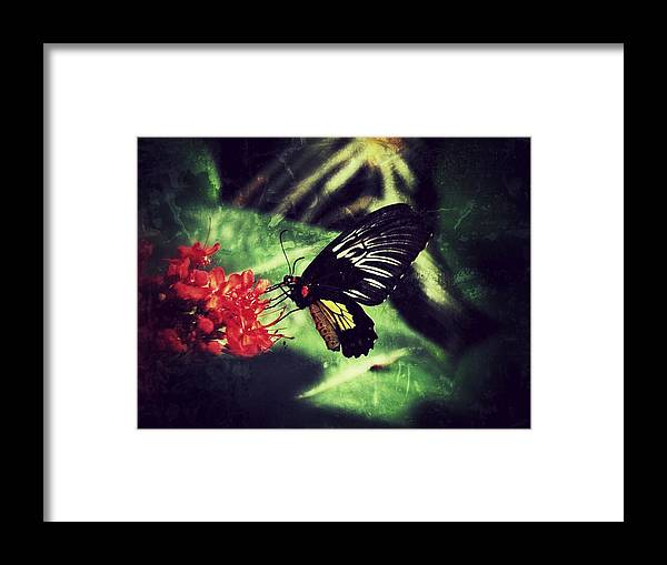 Butterfly Framed Print featuring the photograph Butterfly Grunge by Linda Morland