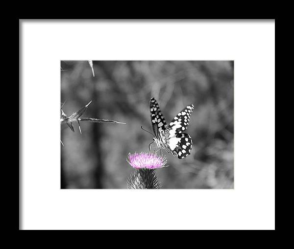 Butterfly Framed Print featuring the photograph Butterfly Landing by Jessica Davis
