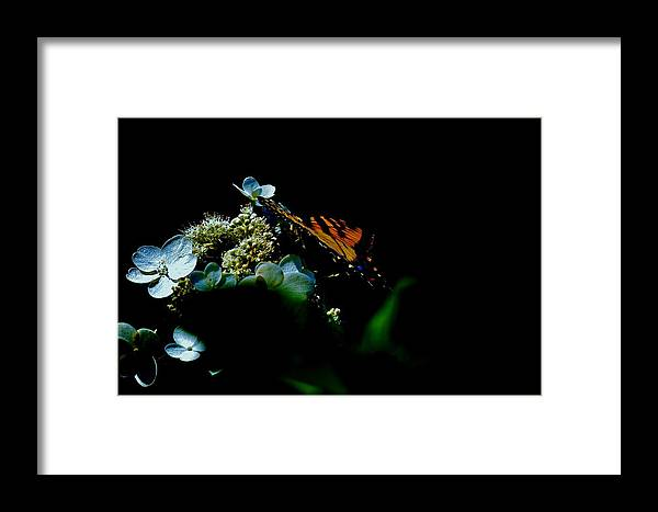 Framed Print featuring the digital art Butterfly Night by Chick Phillips