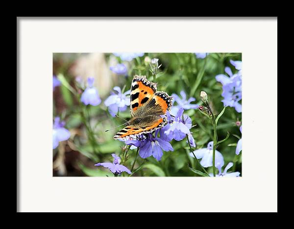 Butterfly Framed Print featuring the photograph Butterfly On Blue Flower by Gordon Auld