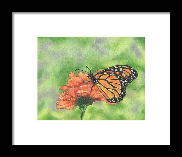 Butterfly Framed Print featuring the drawing Butterfly by Troy Levesque