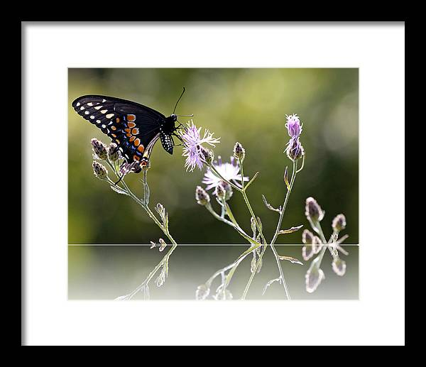 Nature Framed Print featuring the photograph Butterfly With Reflection by Eleanor Abramson