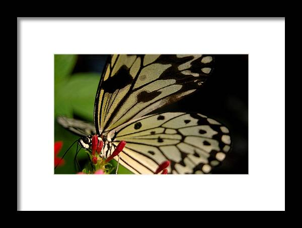 Nature Framed Print featuring the photograph Butterfly World by Renette Louw